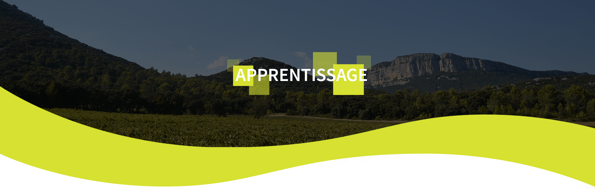 Occitagri - Formation Agricole Occitanie - Apprentissage bg-top_2-min